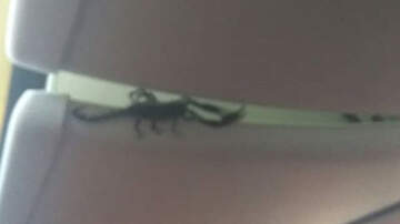 National News - Airline Passengers Shocked As Giant Scorpion Crawls Out Of Overhead Bin