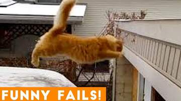 Call me Furious...... Mr. Furious! - Pet Fails to Celebrate National Love Your Pet Day
