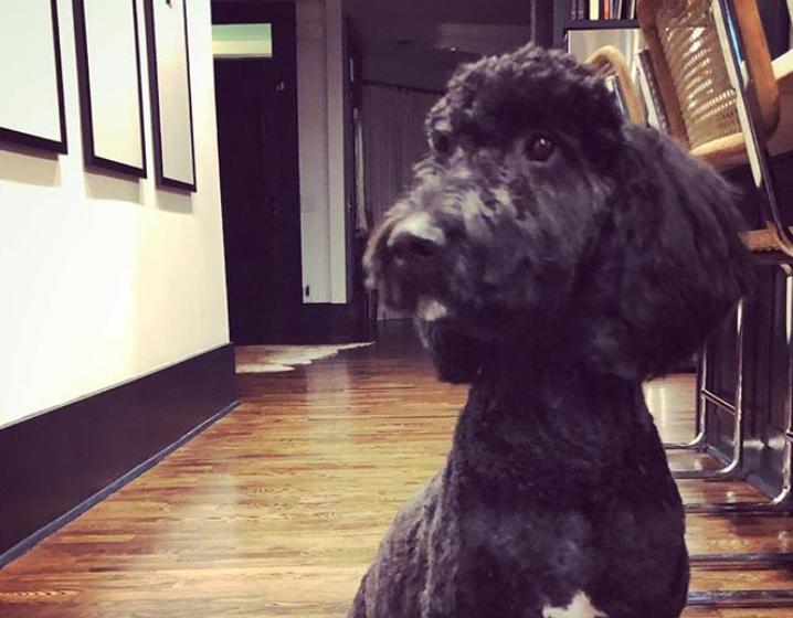 Amy's Dog Chewed Up Some Precious Memorabilia