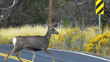 Scott Sloan - VIDEO:  California Bill Would Allow Road Kill As Food