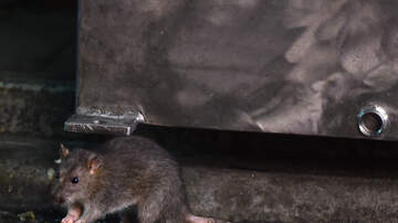 Mo' Bounce - Fat Rat Got Stuck In Sewer Grate