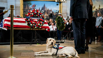 Wonk Report - Former President George H.W. Bush's Service Dog Sully Is Now A Therapy Dog