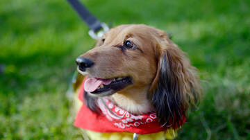 Michelle Buckles - Terminally ill girl wishes for a letter from your dog