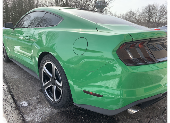 Continue Gallery Photo 1 Of 7 Mojo S Make Out For A Mustang
