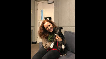 Wags with Wendy - Wags with Wendy 3/5/19 - Sherlock Bones