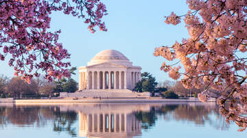 Blossom Bash - Peak Cherry Blossom Bloom Has Been Announced For 2019