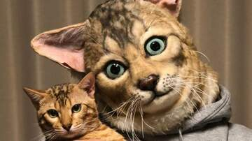 Klinger - You Can Buy Human Size Replica Masks Of Your Pet's Face