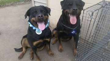 Brady - 2 Rottweilers Sent To Death Row Will Get A Second Chance