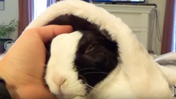 JB - ***VIDEO***  Rabbit Learns He's Adopted