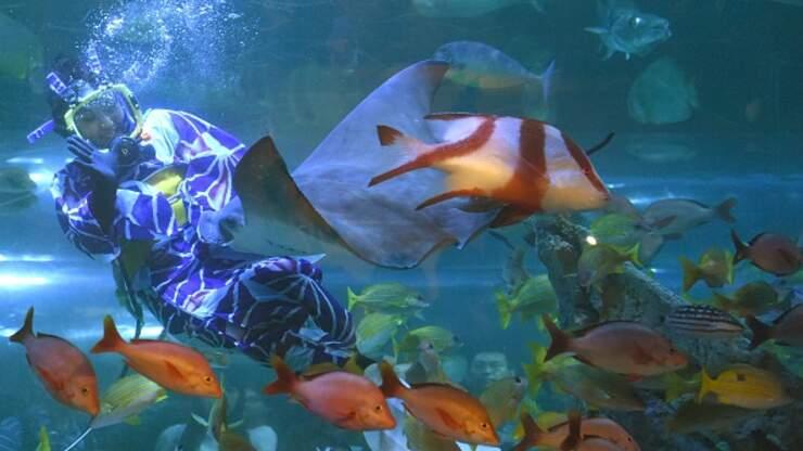 Animal Advocates Sue Fort Lauderdale Over Aquarium Project ...
