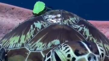 Tim Palmer - If You're Having A Frantic Day, This Turtle Will Help Calm You Down