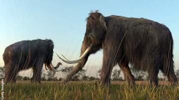 Coast to Coast AM with George Noory - Scientists Revive Woolly Mammoth Cells