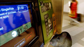 Weird, Odd and Bizarre News - Video Shows Rat Wallowing In MetroCard Change Tray, And We Have Questions