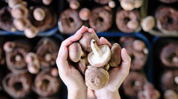 Suzanne And Greg In The Morning - Eating Mushrooms Could Cut Risk Of Dementia By 50%