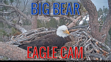 The Drew Thomas Blog - Check out the Bald Eagle nest cam