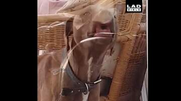 Sean Salisbury - Need a Laugh? Watch this Video of Animals Being Weird