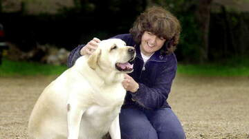 Martha Quinn - Wellness Shot: A New Study Suggests Most Pets Are Overweight