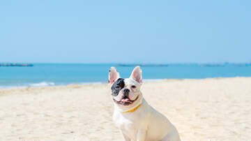 None - If You See This On The Beach, Keep Your Dog As Far Away As Possible