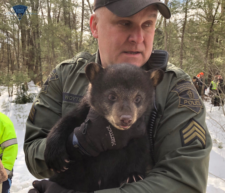 Family of bears moved away from median