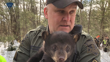 National News - Massachusetts State Police Evict Mother Bear and Cubs From Highway Median