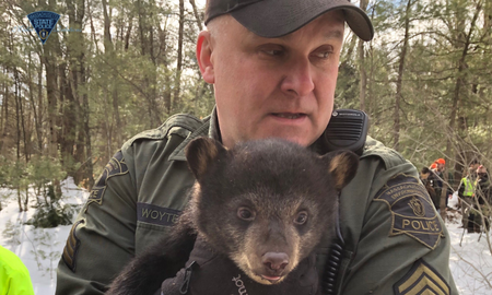 Weird News - Massachusetts State Police Evict Mother Bear and Cubs From Highway Median