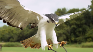 Lee Phillips - Everything is cooler in slow motion...even birds!