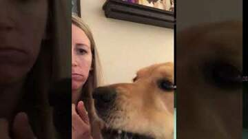 Call me Furious...... Mr. Furious! - Someone Needs to Teach this Dog about Boundaries