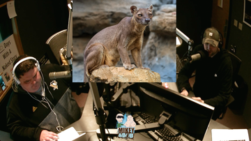 The Morning Freak Show - Mikey and Bob experience fossa mating noises