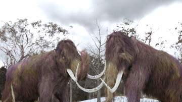 Stranger Zone - Scientists Trying To Bring Back The Woolly Mammoth