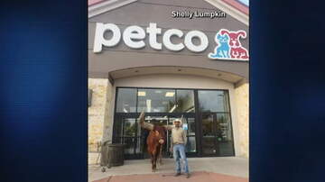 Hitman - Rancher Brings his Steer to PETCO