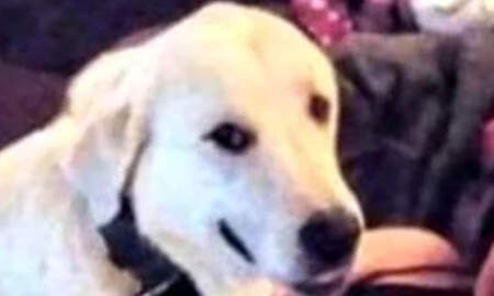 National News - Heroic Dog Dies Saving Family From Gunman Who Attacked Birthday Party