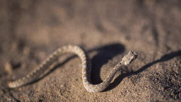 The DSC Show - A Man Discovers 45 RATTLESNAKES Under His House [VIDEO]