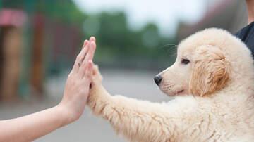 Courtney Lane - America's Most Popular Dogs