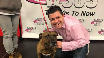 Steve Allan - Let's Help Buddy, My Adopt A Pet Of The Week!