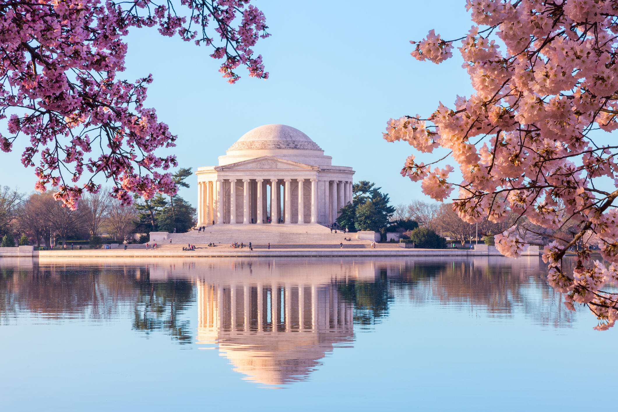 Best Places In DC To See The Cherry Blossoms!