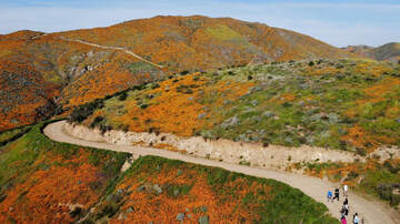 Local News - Agencies Prepare for Supersized 'Super Bloom' Crowds in Lake Elsinore