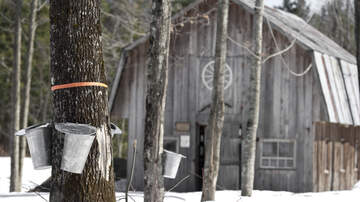 image for The Annual Malabar Farm Maple Syrup festival is coming!