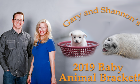 Gary and Shannon - Voting for Round 1 Of The Baby Animal Bracket is Now Open!