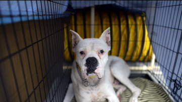 Charlie Munson - Dog Finally Finds A Home After Seven Years In Shelter