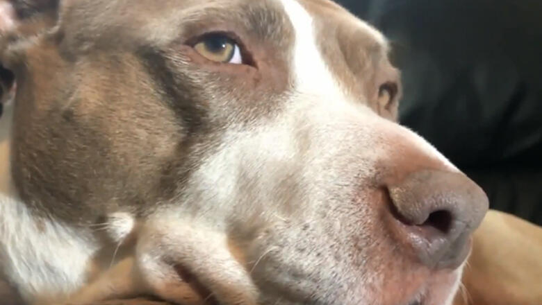 Neighbor Records Dog Forcing Burglar To Climb Out Second-Floor Window