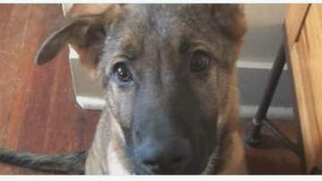 Conrad - W Michigan family shocked after dog dies during ear-cleaning procedure