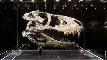 Coast to Coast AM with George Noory - World's Largest T. Rex Found