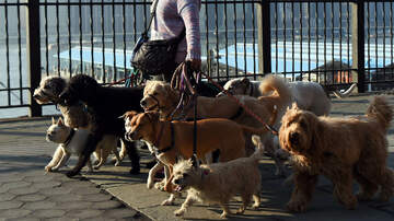 Local News - Hoboken Poop Patrol Tasked With Ticketing Dog Owners Who Don't Clean Up