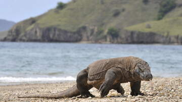 Weird, Odd and Bizarre News - Komodo Island Closing Until 2020 Because People Keep Stealing The Dragons