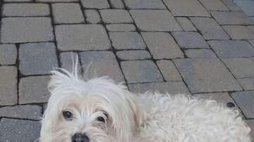 EB's Babes - Meet PETER, a 4 year old Maltese that needs a home!