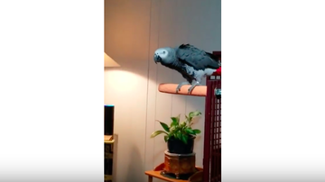 JB - ***Video*** Bird Hates Music, Shuts Alexa Down