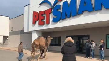 Weird News - Michigan Man Brings His Camel Into PetSmart