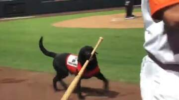 Clint Girlie - Baseball Umpire Gets Booed For Stealing From Dog