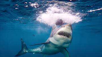 Pat Walsh | 7pm - 10pm - Shark wrapped in car belt rescued by Alabama fisherman