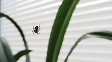 Dana McKay - There's a spider in the house... Do you kill it or put it outside?